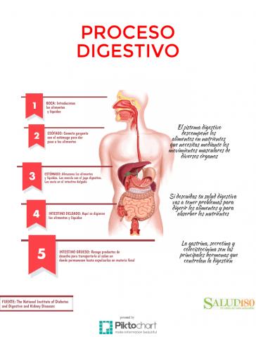 mejorar digestión