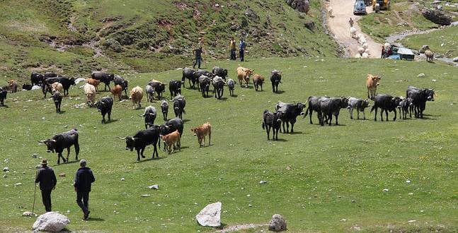 enfermedades intestinales del ganado